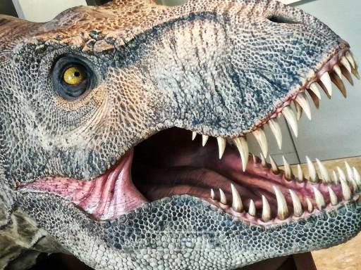 MUPA - Museo de Paleontología de Castilla-La Mancha: dinosauriomanía para todos
